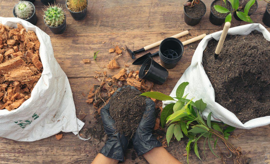Aprenda como fazer um jardim de inverno
